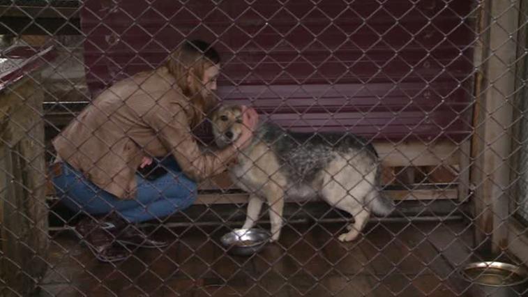 Жительница Верхнеблаговещенского создала домашний приют для бродячих животных