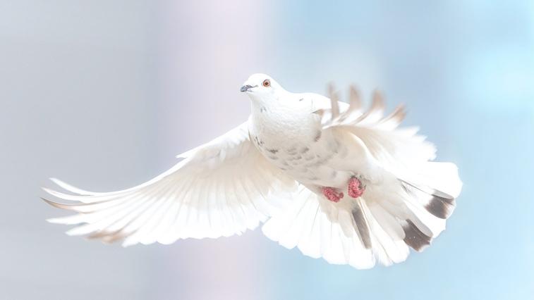 В Благовещенске в день проведения Парада Победы выпустят в небо голубей