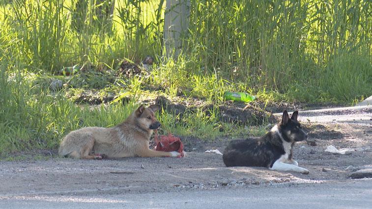 Районы области приступили к оборудованию временных пунктов содержания безнадзорных собак