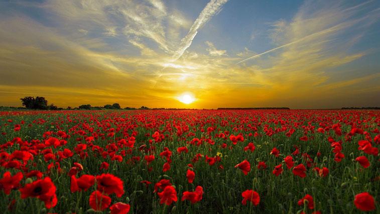 Любовь и солнце: 8 июля в Амурской области синоптики обещают хорошую погоду