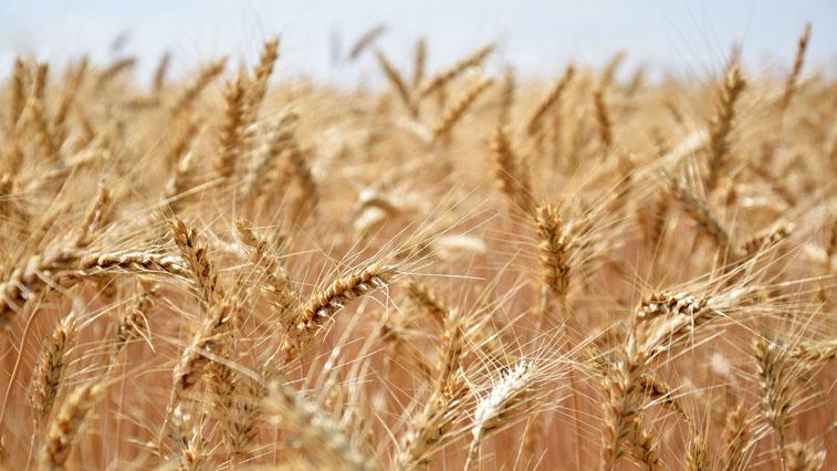 Производителей удобрений поддержит государство. Цель – увеличить экспорт продукции