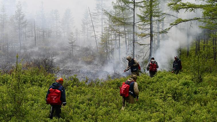 Северная амурская тайга продолжает гореть: в области 45 природных пожаров