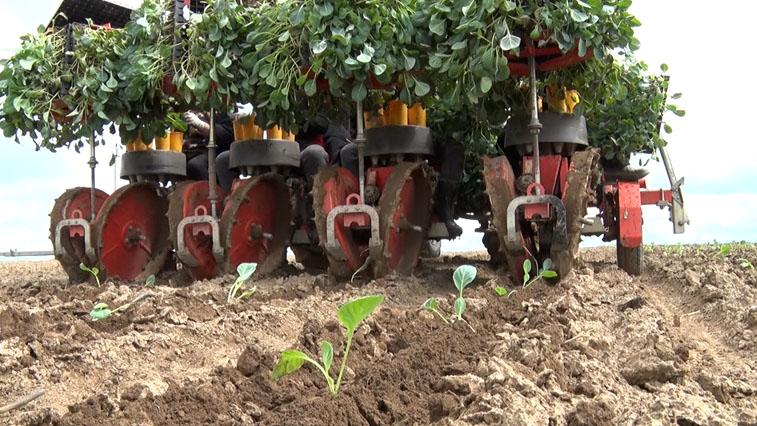 Овощеводы области должны на 80% обеспечивать регион местной продукцией