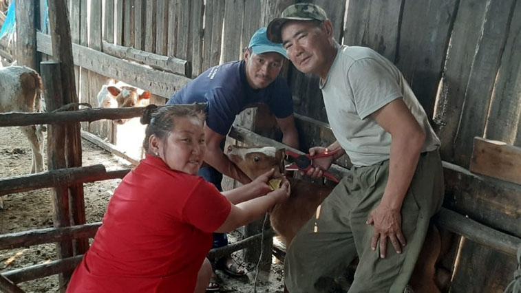 В Якутии начнут чипировать домашних животных
