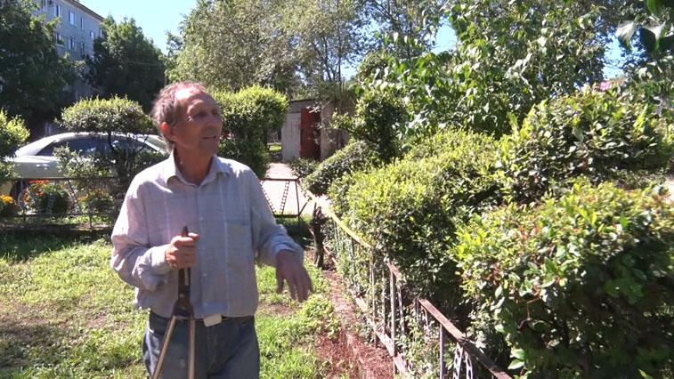 Благовещенцу, который занимается фигурной обрезкой деревьев, вернули пропавшие ножницы