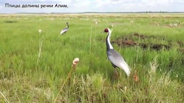 Уникальной природной территории возле Благовещенска угрожает стройка