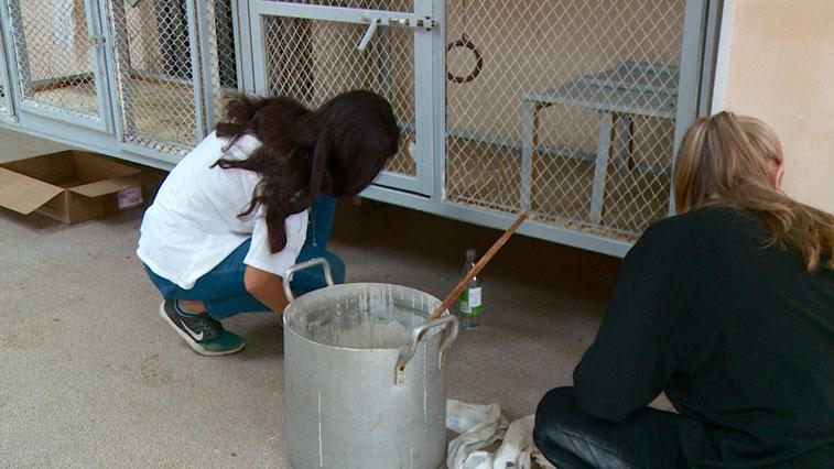 15 волонтеров помогли сделать ремонт в живом уголке Амурского биолого-туристического центра