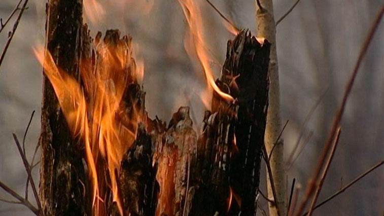 В Приамурье стало меньше пожаров, но вырос ущерб