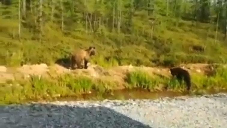 В Тындинском районе местные жители повстречали маленьких медвежат