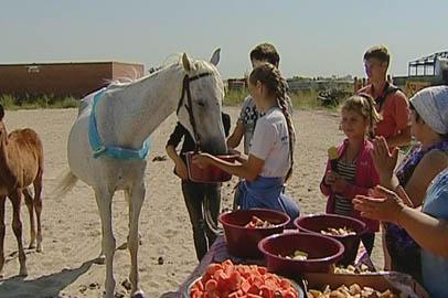 В областном центре лошадей поздравили с днем Флора и Лавра