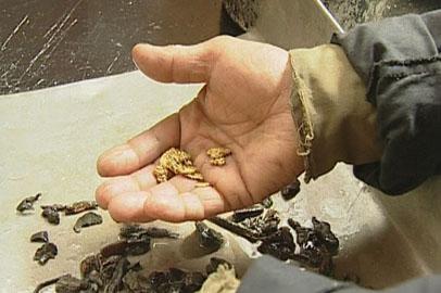 Золотодобытчики Приамурья планируют  превысить  прошлогодние показатели