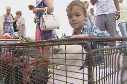 На сельхозярмарке в Благовещенске продавали гуся и индюка