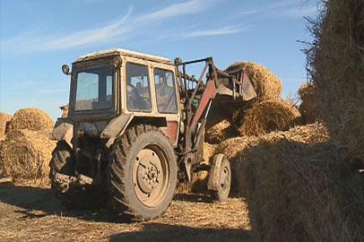 Две недели осталось у амурских аграриев на заготовку кормов