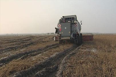 За помощью в амурский Минсельхоз обратились около 400 хозяйств