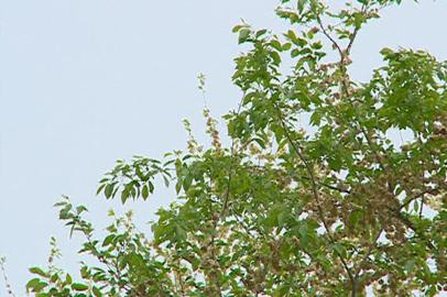 Синоптики прогнозируют в Приамурье обильные дожди