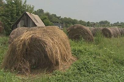 План заготовки кормов в Приамурье выполнен уже наполовину