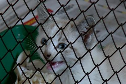 Зоозащитники просят благовещенцев помочь бездомным животным