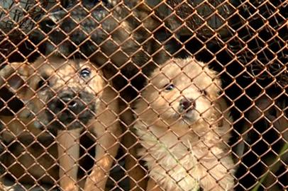У животных из благовещенского приюта «Остров спасения» обнаружили инфекцию