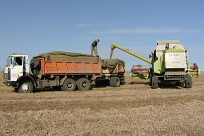 Амурские аграрии намолотили почти сто тысяч тонн сои