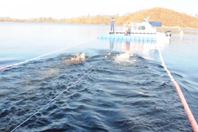 Более 70 любителей плавания в холодной воде преодолели «Бурейскую милю»