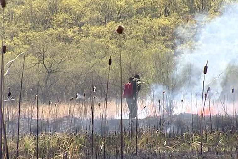 Жара обострила ситуацию с природными пожарами в Приамурье